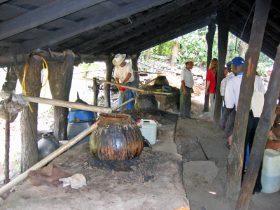 Indigenous production of Tequila, Mexico